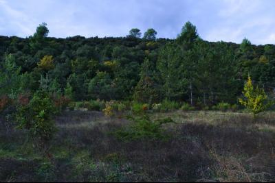 Allemagne en Provence - Terrain constructible - 1377 m2 - Vue dégagée