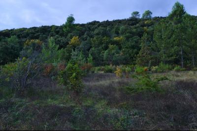 Allemagne en Provence - Terrain constructible - 1440 m2 - Vue dégagée