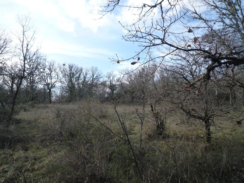 Beau terrain à bâtir boisé