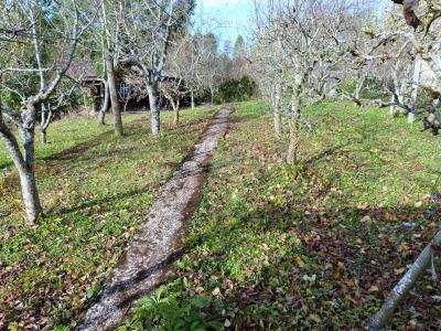 ORGELET JURA 39 11km Vends Ancienne FERME en pierres -à rénover-(vastes dépendances,jardin, verger), Verger - arbres en espaliers -