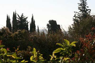 Vue: Vue de la terrasse, 4 PIECES AU CALME AVEC BELLE TERRASSE DANS RESIDENCE ARBOREE