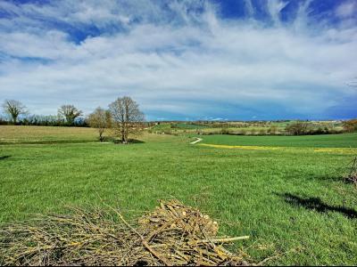 Villemotier - A vendre maison avec un hectare de terrain