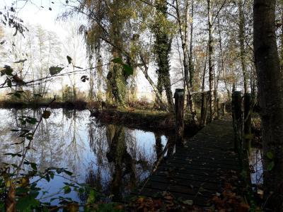 Chaveyriat - A vendre étang pêche sur 4 hectares