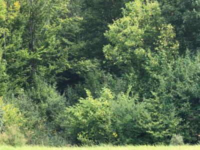 A Vendre terrain bois� de 3000 m2 Gien 45 Loiret