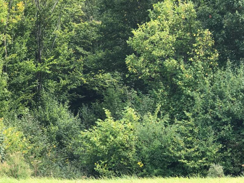 Vente  terrain boisé de 3000 m2 Montargis 45 Loiret