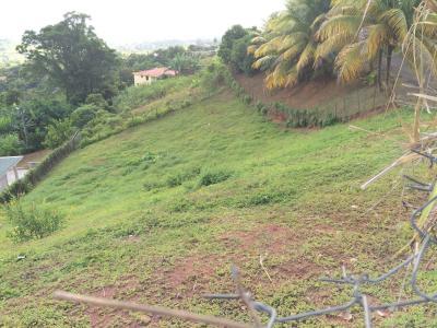 Terrain de 1048 m2 en pente douce, clôturé, sur les hauteurs de Trinité Agence Accord Immobilier, Martinique