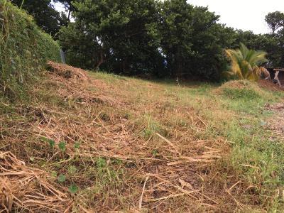 Le Lorrain (97214), Terrain plat en lotissement viabilisé de 653 m2 Agence Accord Immobilier, Martinique
