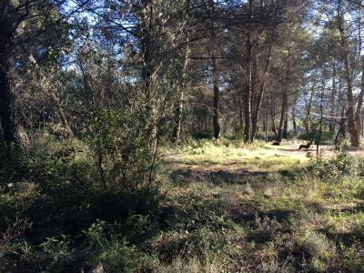 FLAYOSC : Beau terrain plat de 1500 m2