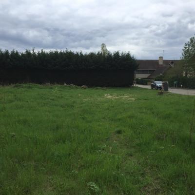 Terrain à bâtir proche barbizon, Agence Immobilière en Seine-et-Marne, Carre-Immo, secteur de Barbizon