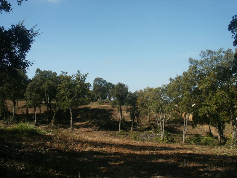 TERRAIN PLAINE DE CUTTOLI