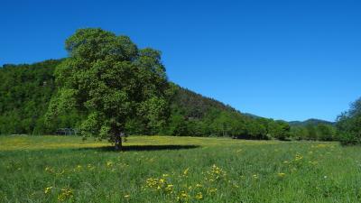 Terrain roquefeuil, Agence Immobilière UnChezVous en Ariège et Aude