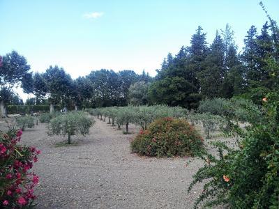 Vue: Propriété à Saint Rémy de Provence jardin, Un mas provençal à vendre sur un parc de 3 hectares et demi à Saint Rémy de Provence