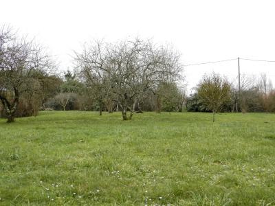 SAINT GERMAIN DU BOIS (71), maison de plain-pied à rénover environ 90 m², terrain 2700 m² environ, VUE TERRAIN
