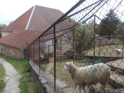 Salins les Bains vends belle maison de pierres, 5 pièces, 130m², dépendances sur 1200m² de terrain., idem