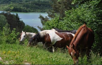 Jura, Région des lacs. Rare ! Propriété équestre 4 ha site idyllique, proche lac de Vouglans., Parcelle au dessus du lac