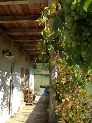 Jura, Proche Lac de Vouglans, à vendre Belle propriété rénovée 8 chambres sur 2,5 ha avec écuries., détail terrasse et vigne