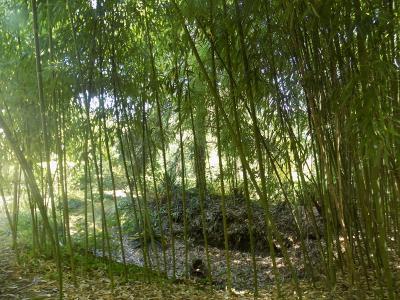 Charme et cachet pour cette propri�t� en pierres avec un parc arbor� de 9000 m�
